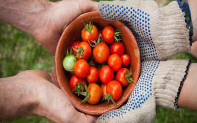 The DIY Guide to Your Restaurant's Own Garden
