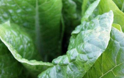 Restaurant Supplies to Help Ensure Food Safety